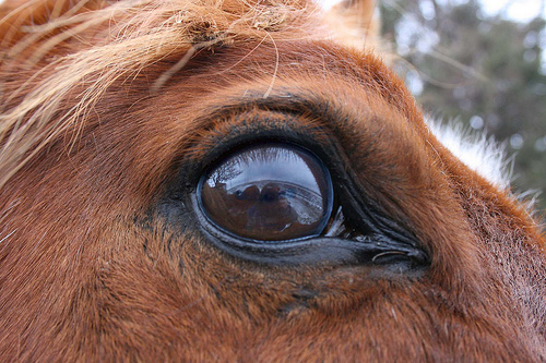 Me in an eye