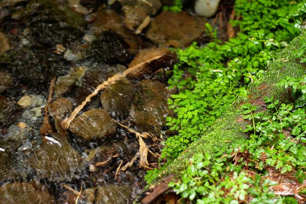 Spruce trail11