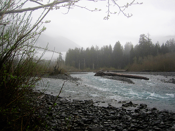 Spruce trail20