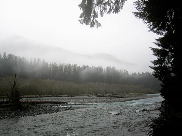 Spruce trail17