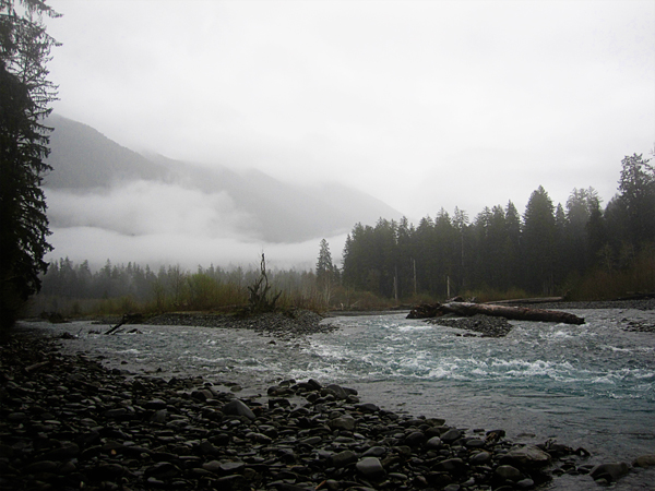 Spruce trail22