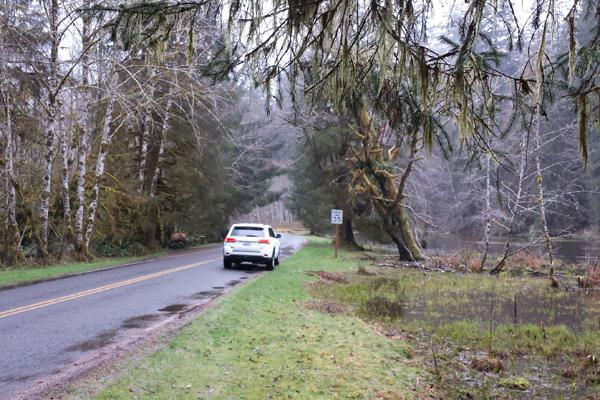 Spruce trail24