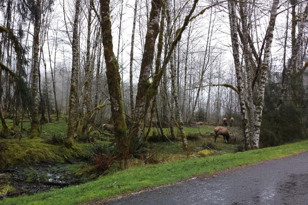 Spruce trail25