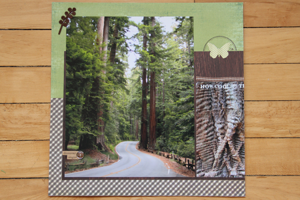 Big basin redwoods002