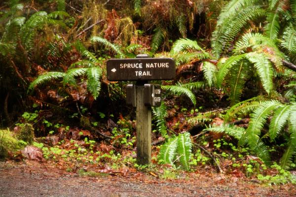 Spruce trail1