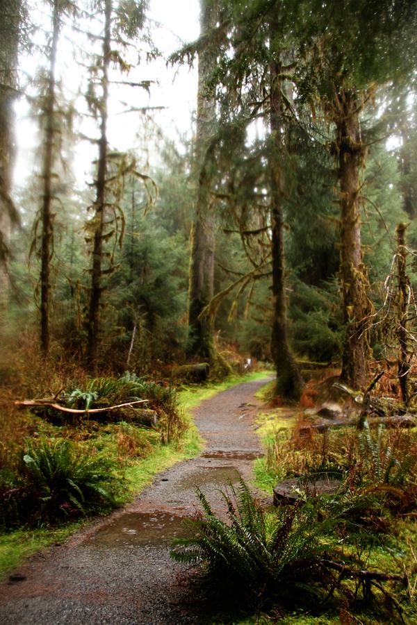 Spruce trail2
