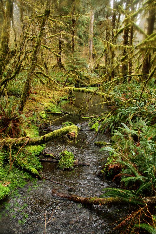 Spruce trail5