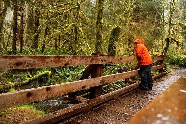 Spruce trail7