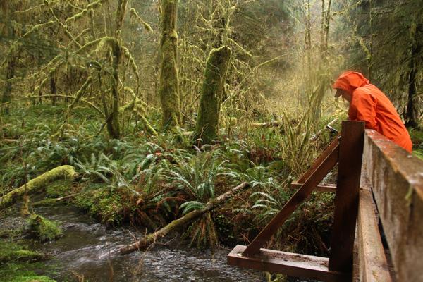Spruce trail8