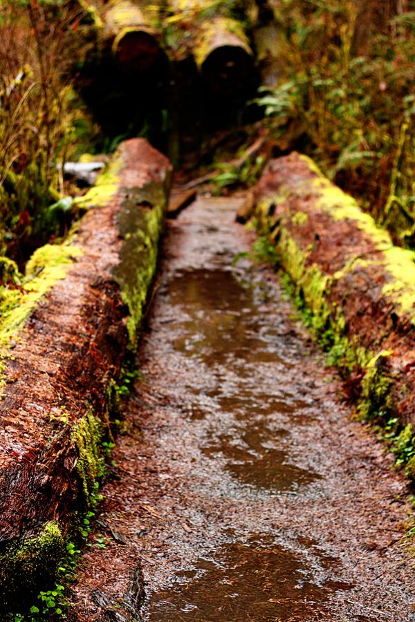 Spruce trail13
