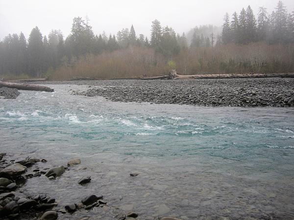 Spruce trail21