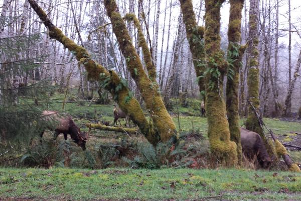 Spruce trail23