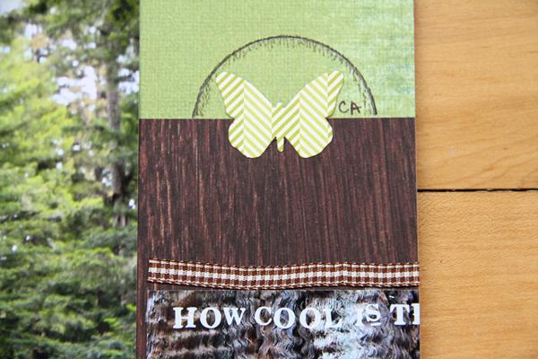 Big basin redwoods005