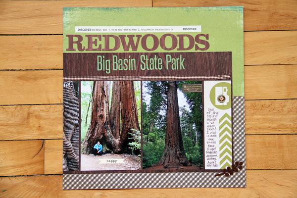 Big basin redwoods007