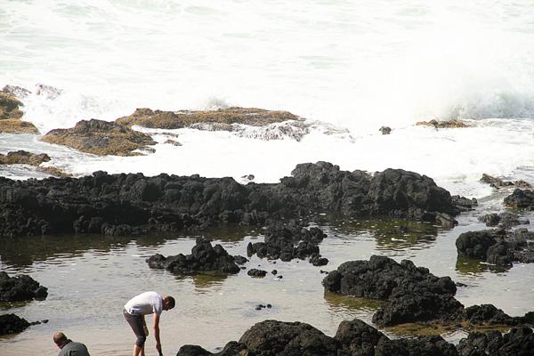 Cape perpetua019