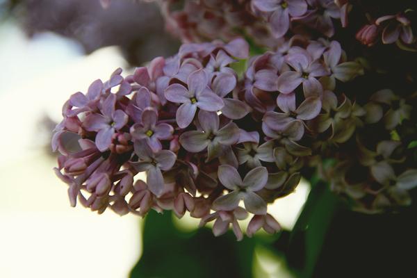 Springishere.003