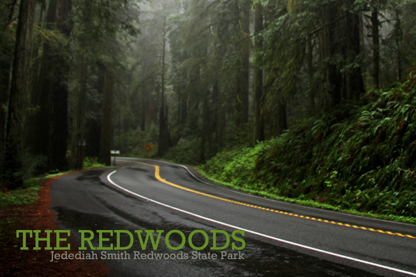 Jsmith_redwoods_sp