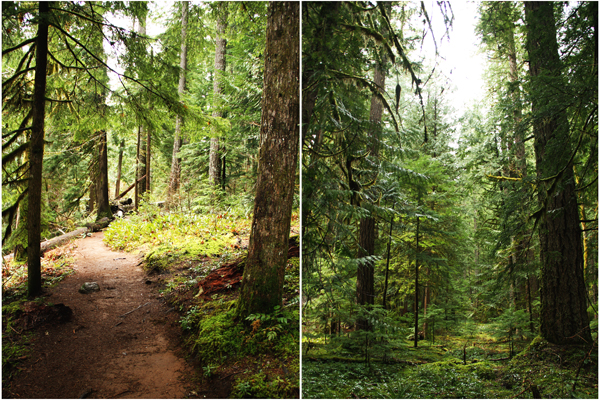 Willamette_natl_forest.027