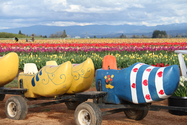 Tulip_farm.017