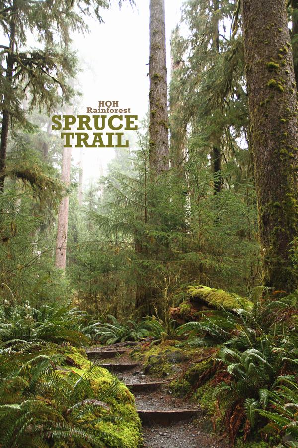 Spruce-trail