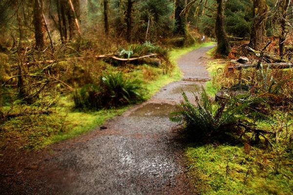 Spruce trail3