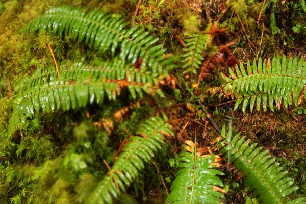Spruce trail4