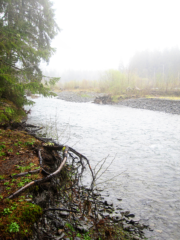 Spruce trail18
