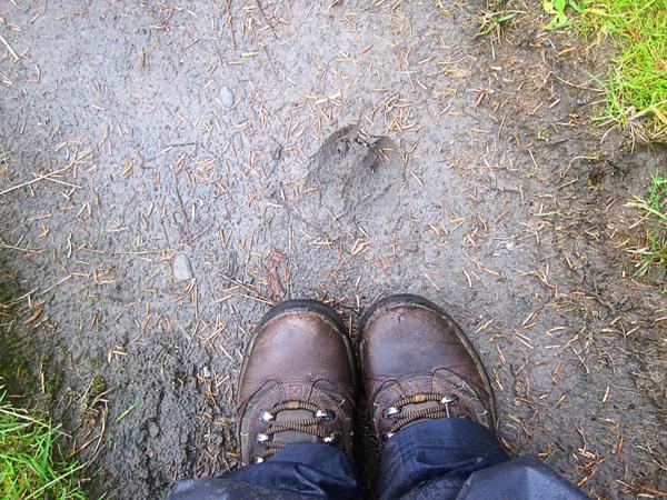 Spruce trail19