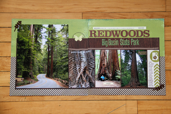 Big basin redwoods001