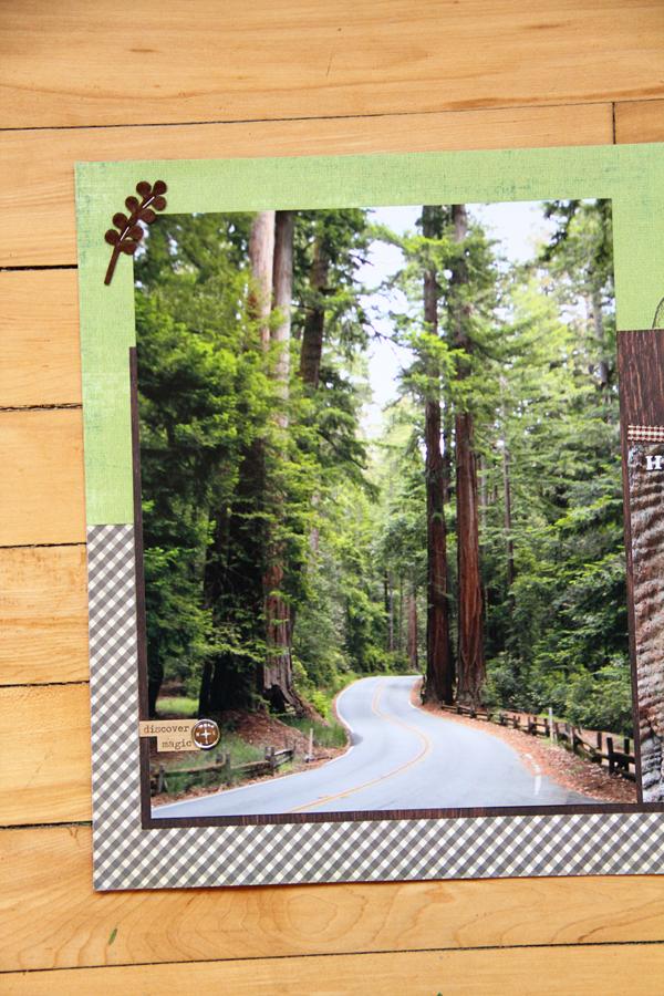 Big basin redwoods003