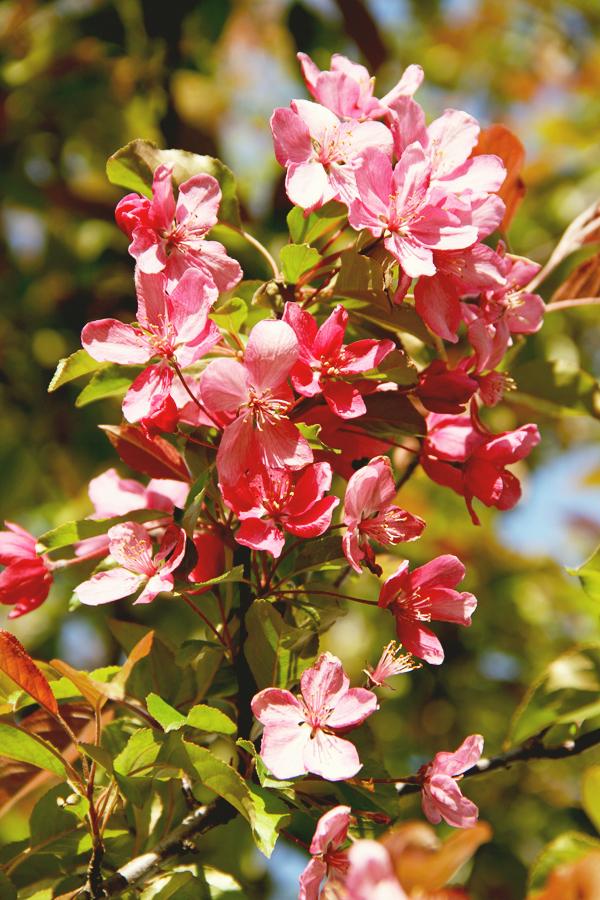 Springishere.012