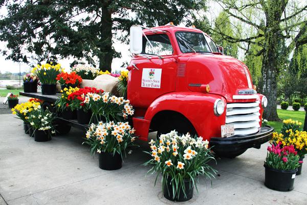 Tulip_farm.022
