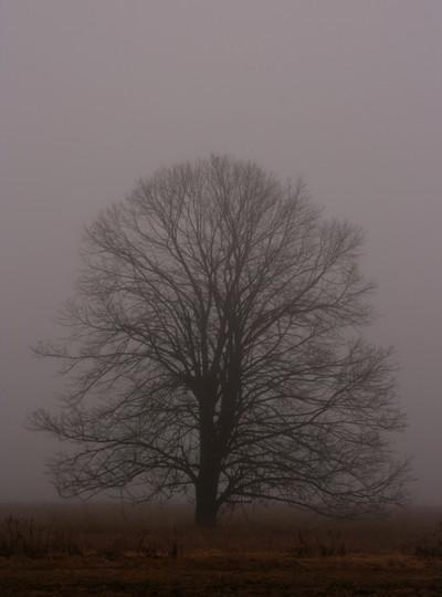 The_lone_tree