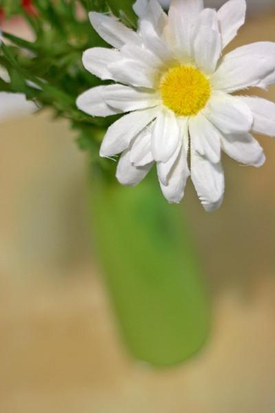 33008_spring_fever