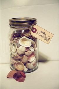 Florida_seashells
